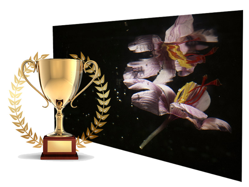 Premios fotografía sobre